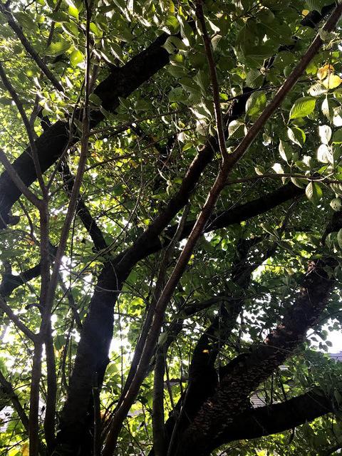 セミの森.jpg