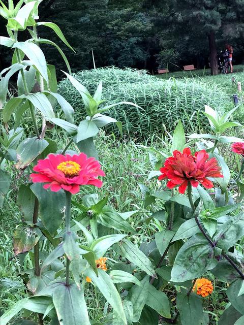 花のにらめっこ.jpg